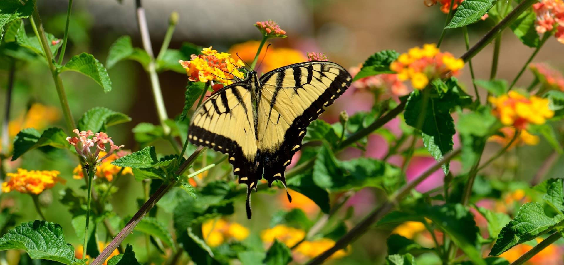 Butterfly 3038896 1920
